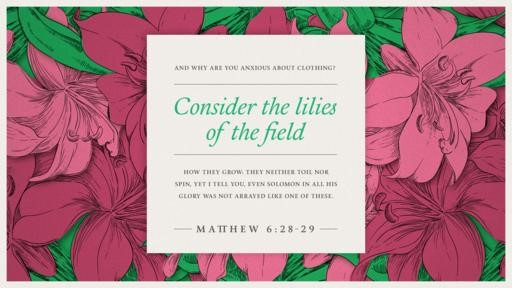 Matthew 628–29 [widescreen]