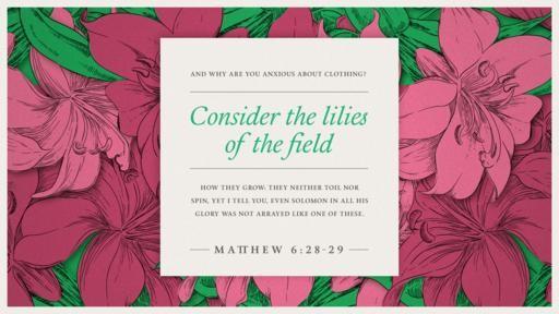 Matthew 628–29 [widescreen]